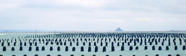 """Résultat de recherche d'images pour """"baie du mont saint michel mytiliculture"""""""