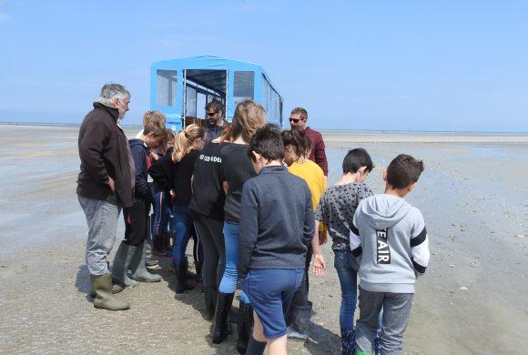 Projet d'Aire Marine Educative dans la Baie