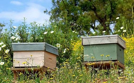 APICULTURE – Déclaration des ruchers 2020