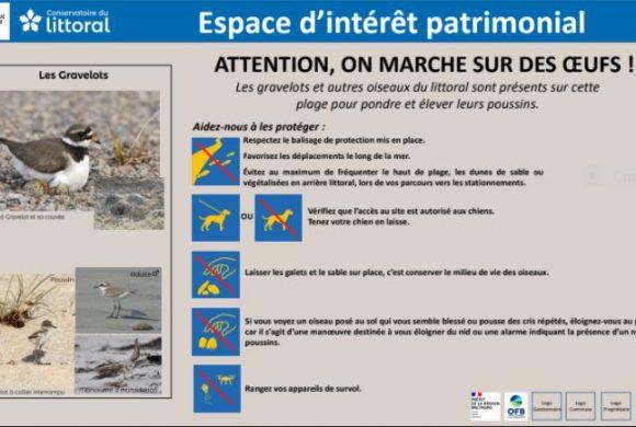 OPERATION LITTORAL 2021 «ATTENTION, ON MARCHE SUR DES OEUFS !»